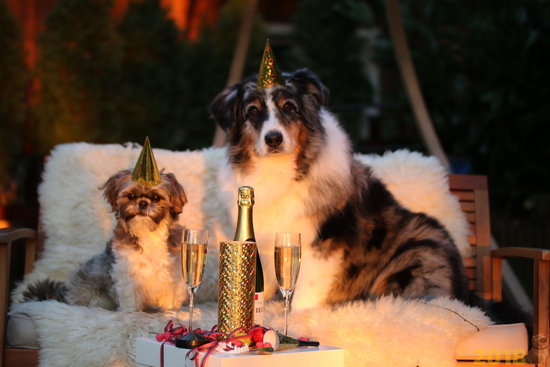 что подарить в год собаки